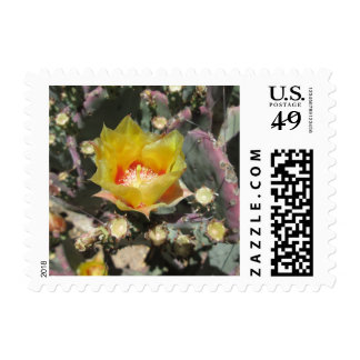 Prickly Pear Black Spined Postage Stamps
