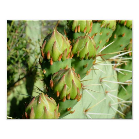 Prickly Pear Blooms Poster