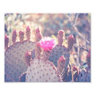 Prickly Pear Blossom   Photo Print