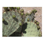 Prickly Pear Buds Postcards