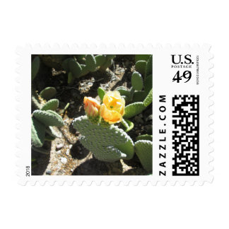 Prickly Pear Bunny Postage Stamp