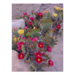 Prickly Pear Cacti Posters