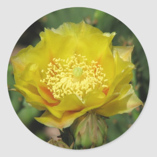 Prickly Pear Cactus Bloom Classic Round Sticker