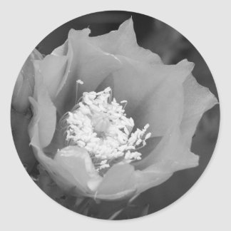Prickly Pear Cactus Bloom Round Stickers