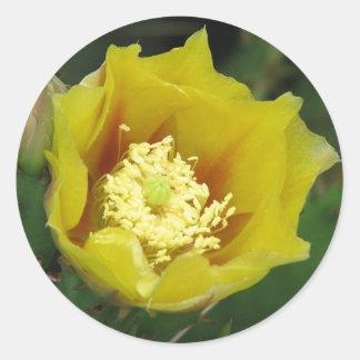 Prickly Pear Cactus Bloom Round Sticker