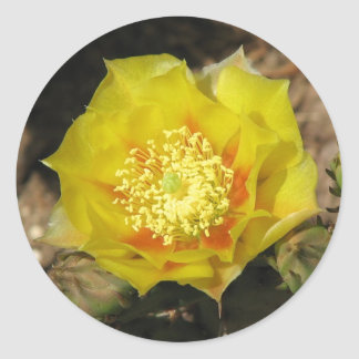 Prickly Pear Cactus Bloom Sticker