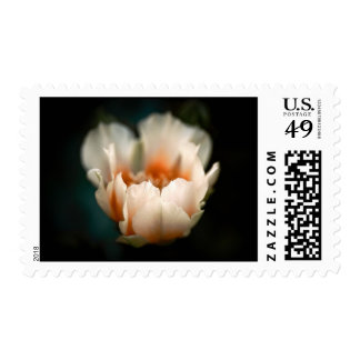 Prickly Pear Cactus blossom Postage Stamp