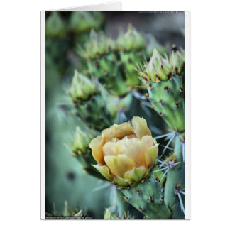 Prickly Pear Cactus Flower Card