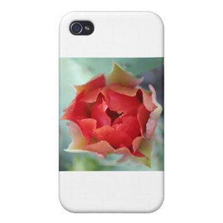 Prickly Pear Cactus Flower iPhone 4/4S Covers