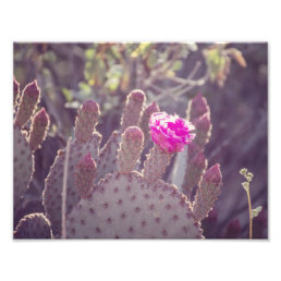 Prickly Pear Cactus Flower | Photo Print