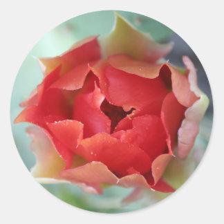 Prickly Pear Cactus Flower Sticker