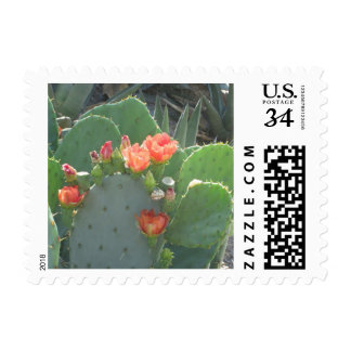 Prickly Pear Cactus Green Red Bloom Postage