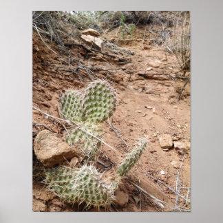 Prickly pear cactus, in sandstone hogbacks poster