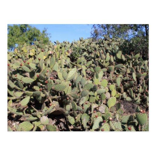 Prickly Pear Cactus Line Postcard