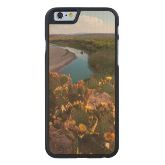 Prickly Pear Cactus (Opuntia Sp.) Carved Maple iPhone 6 Case