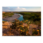 Prickly Pear Cactus (Opuntia Sp.) Postcards