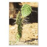 Prickly Pear Cactus Print Art Photo