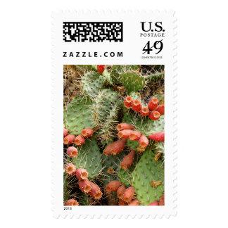 Prickly Pear Cactus Stamp