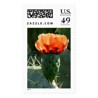 Prickly Pear Cactus Stamps