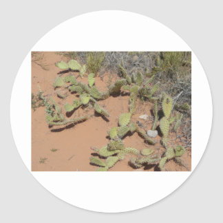 prickly pear cactus round stickers