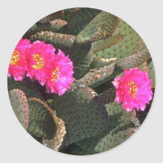 Prickly Pear Cactus Stickers