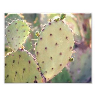 Prickly Pear Closeup | Photo Print