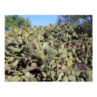 Prickly Pear Gifts Postcard