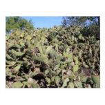 Prickly Pear Gifts Postcards