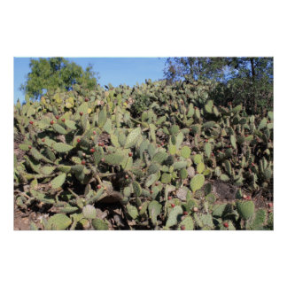 Prickly Pear Gifts Poster