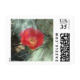 Prickly Pear Green with Red Bloom Postage Stamps