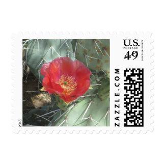 Prickly Pear Green with Red Bloom Stamp