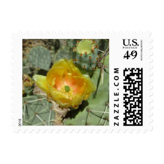 Prickly Pear Green Yellow Bloom Postage Stamp