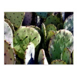 Prickly Pear No. 3 Postcard