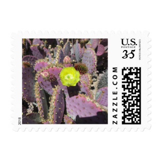 Prickly Pear Purple Yellow Postage Stamps