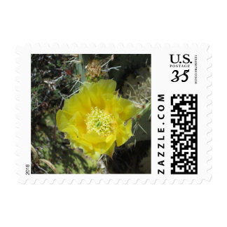 Prickly Pear Yellow Bloom Close Postage Stamp