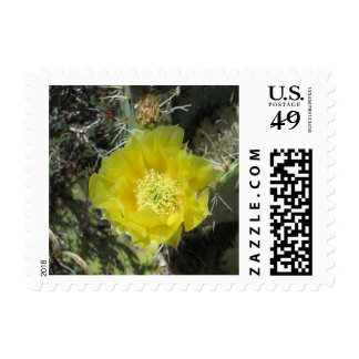 Prickly Pear Yellow Bloom Close Stamps