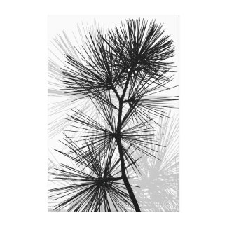 Prickly Pine Stretched Canvas Prints