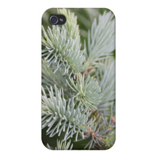 Prickly Pine iPhone 4 Covers