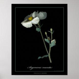 Prickly Poppy Botanical Art Print