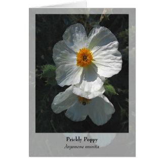 Prickly Poppy - Native Notecard Cards