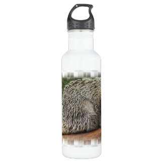 Prickly Porcupine 24oz Water Bottle