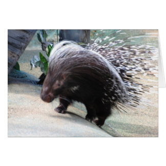Prickly Porcupine Greeting Card