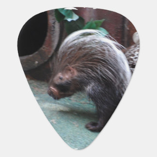 Prickly Porcupine Guitar Pick