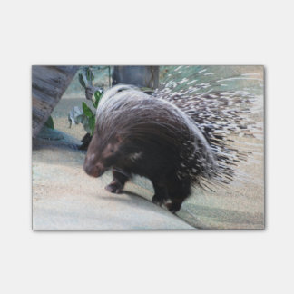 Prickly Porcupine Post-it® Notes