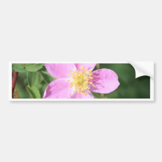 Prickly Rose Bumper Sticker