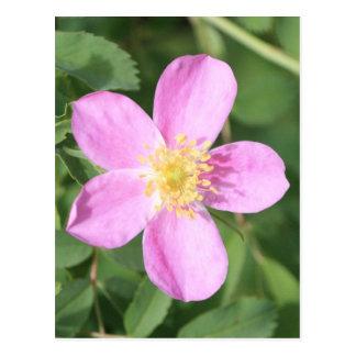 Prickly Rose Postcard