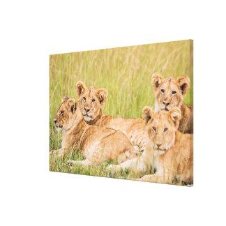 Pride of Lion Cubs Canvas Print