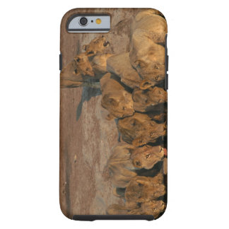 Pride of Lions Drinking Tough iPhone 6 Case