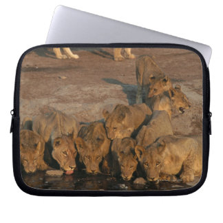 Pride of Lions Drinking Computer Sleeve
