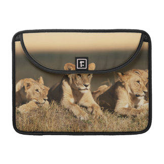 Pride of young male Lions MacBook Pro Sleeve
